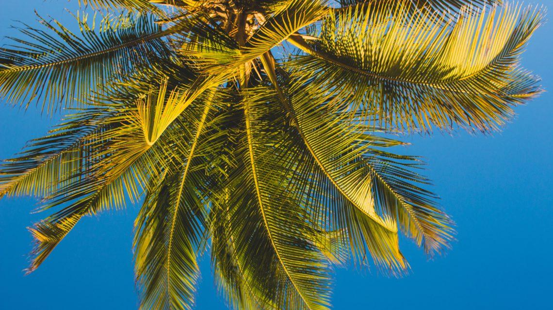 Waarom dit jaar op vakantie naar Curaçao